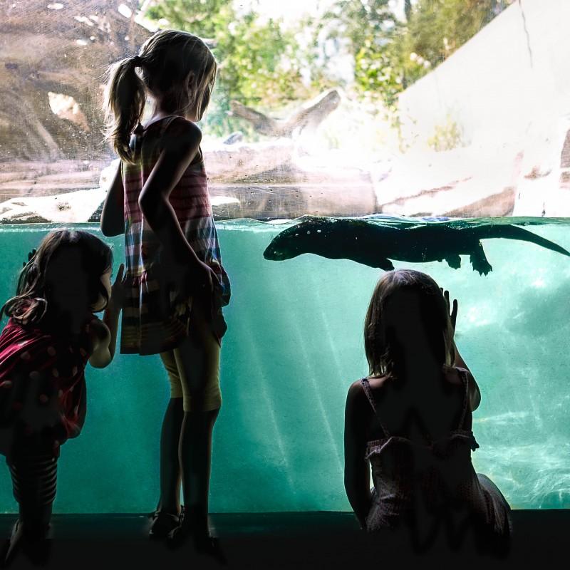 Visit The Calgary Zoo #visitcalgary