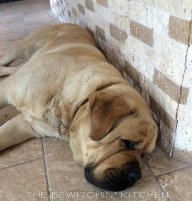 Desert Hills Dog