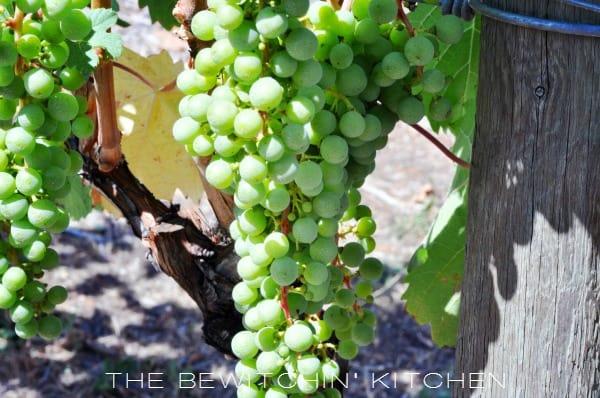 Okanagan Grapes
