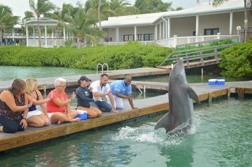 Dolphin Connection at Hawks Cay Resort in Duck Key (Florida Keys). Meeting the dolphins was such a treat but being educated on how YOU can help them is even better. This has been crossed off my family travel bucket list.